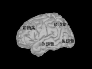 Brain_left_lobe